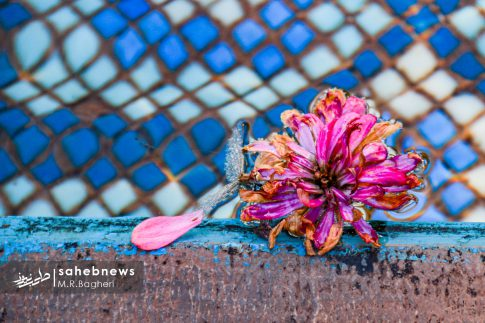 نمایشگاه گل های داوودی اصفهان (9)