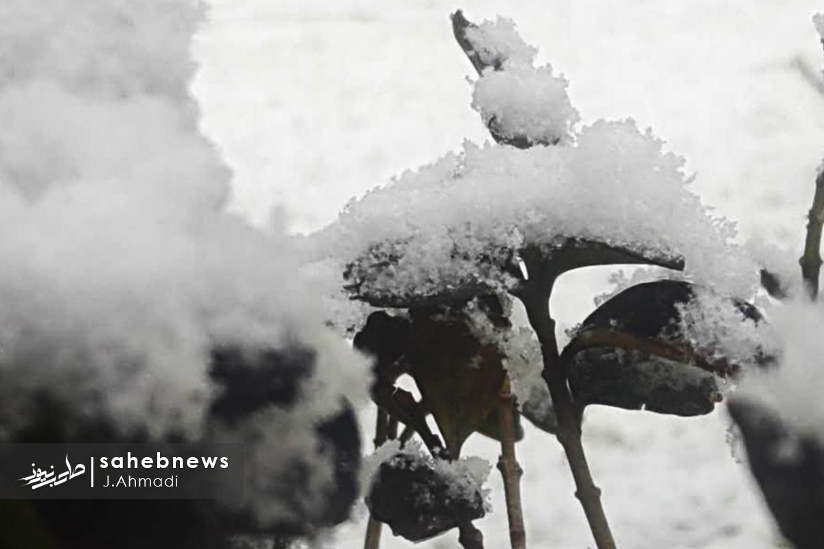 برف اصفهان (10)