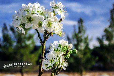 بهار حبیب آباد (1)
