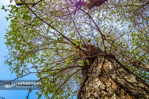 بهار حبیب آباد (10)