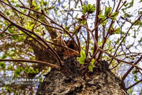 بهار حبیب آباد (12)