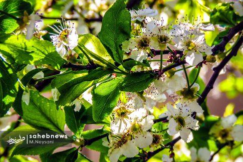 بهار حبیب آباد (13)