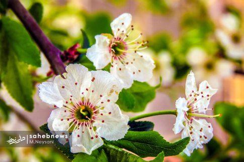 بهار حبیب آباد (15)