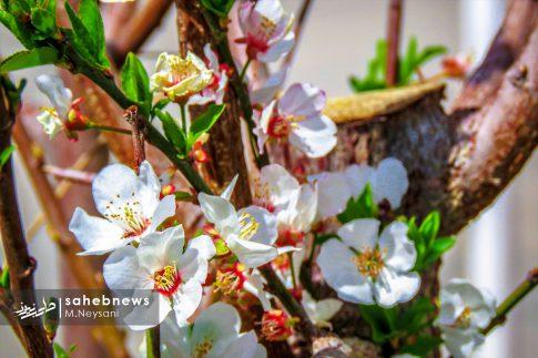 بهار حبیب آباد (16)