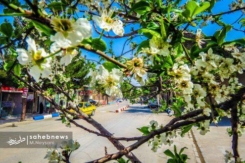 بهار حبیب آباد (18)
