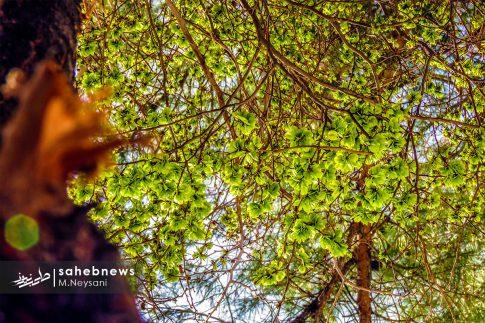 بهار حبیب آباد (2)