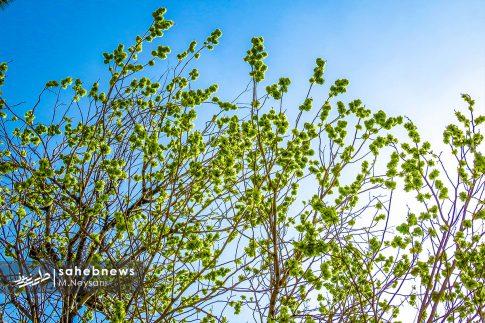 بهار حبیب آباد (3)