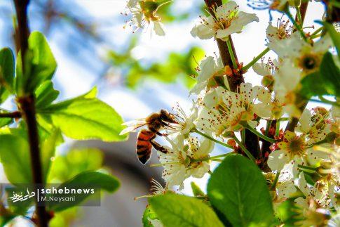 بهار حبیب آباد (4)