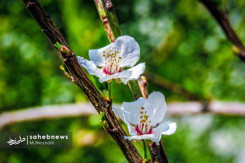 بهار حبیب آباد (5)