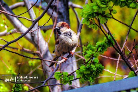 بهار حبیب آباد (6)