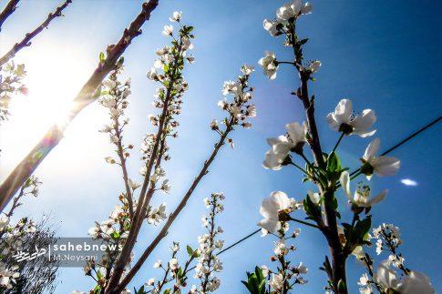 بهار حبیب آباد (7)