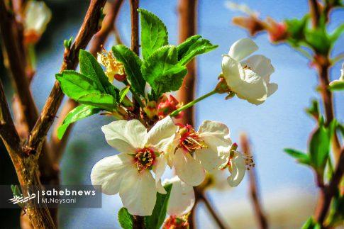 بهار حبیب آباد (8)