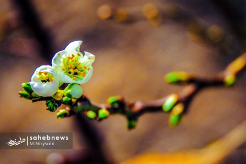 بهار حبیب آباد (9)