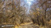 پارک جنگلی حبیب آباد برخوار (22)