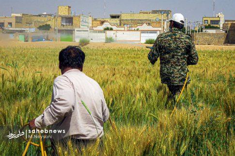 اجرای طرح مبارزه با سن غلات در مزارع برخوار (10)