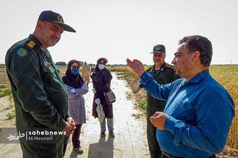 اجرای طرح مبارزه با سن غلات در مزارع برخوار (2)