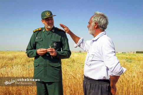 اجرای طرح مبارزه با سن غلات در مزارع برخوار (3)