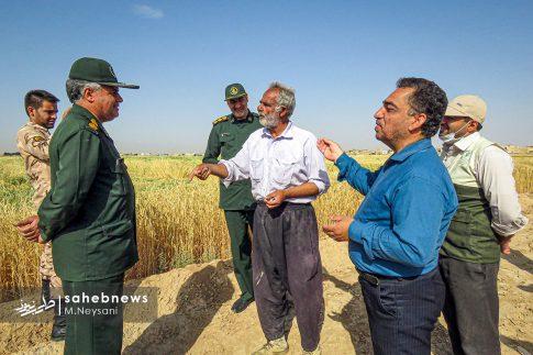 اجرای طرح مبارزه با سن غلات در مزارع برخوار (8)