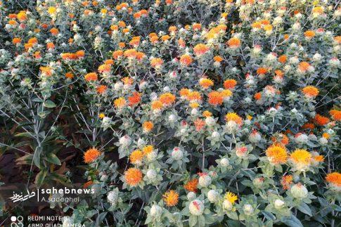 photo_2020-07-01_16-58-00