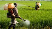 سموم+کشاورزی