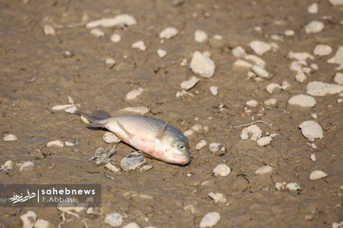 مرگ ماهی های زاینده رود (14)