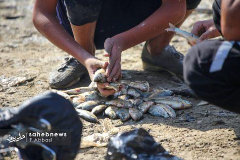 مرگ ماهی های زاینده رود (16)