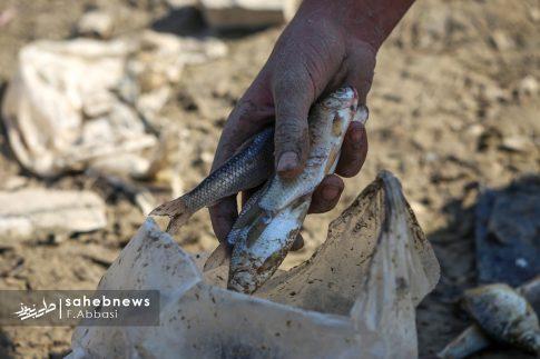 مرگ ماهی های زاینده رود (18)