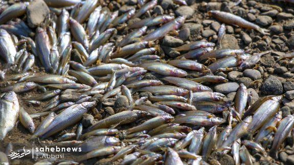 مرگ ماهی های زاینده رود (7)