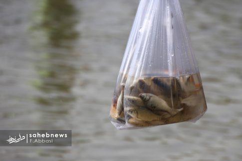 مرگ ماهی های زاینده رود (8)