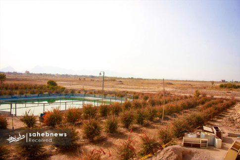 برداشت زرشک از 10 هکتار اراضی شهرستان برخوار (11)